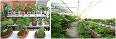 绿化服务 (1)